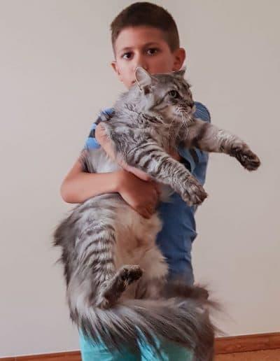 Photo de notre fils qui tien dans ces bras notre chatte Jumanji.