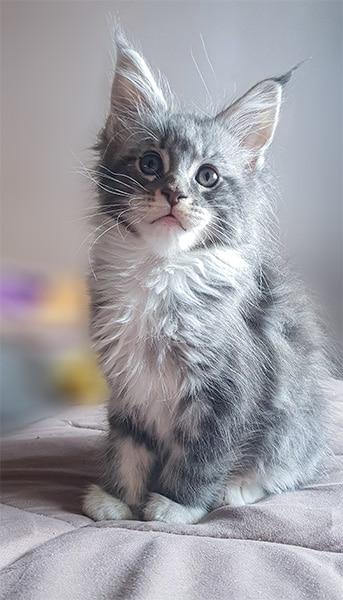 Photo d'une de nos nouvelles chattes qui s'appelle Pixel