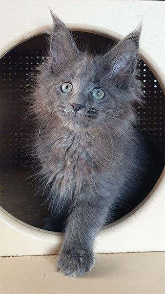 Photo de Riana, un chaton femelle de trois mois qui sort de son arbre à chats